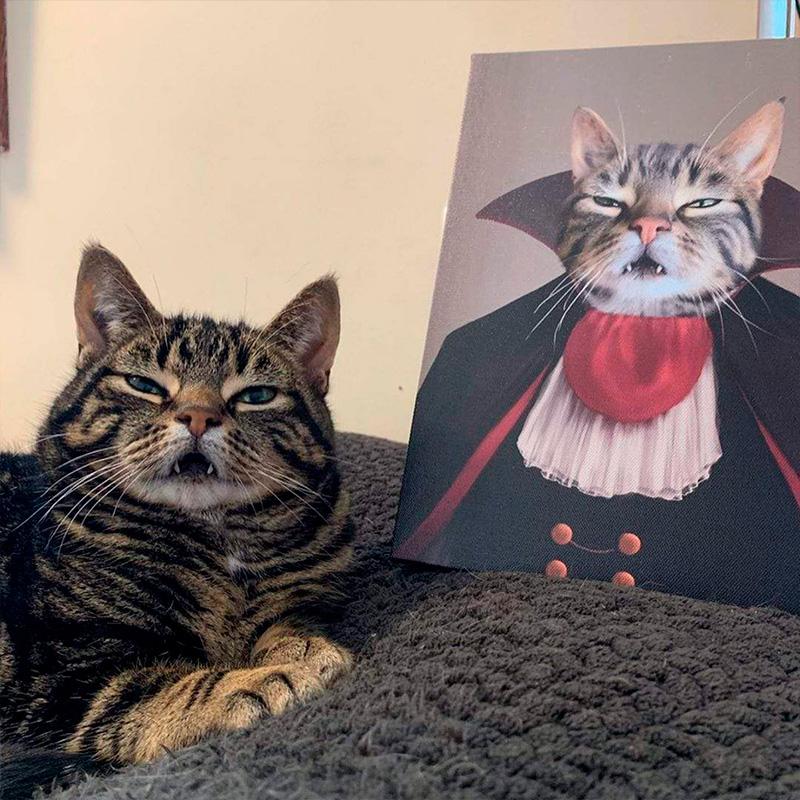 Портрет кота в образе графа Дракулы