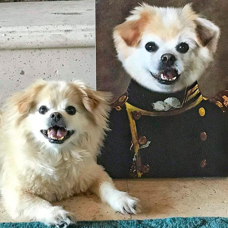 Портрет собаки в образе генерала